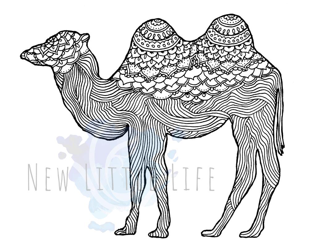 Camel WM